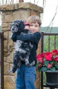 Bronte. Blue Merle Puppy