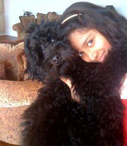 Black Australian Labradoodle Puppy