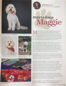 Maggie the Labradoodle