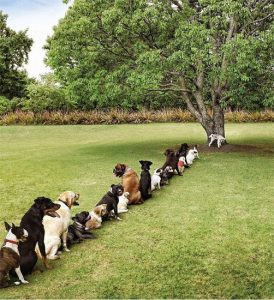 Dogs waiting in line for bathroom